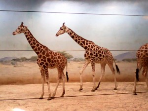 Schuldgefühle im Zoo